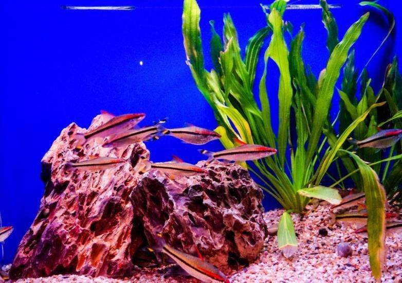 饲养热带鱼有哪些误区?新手养热带鱼错误观点
